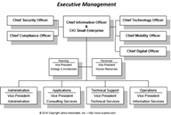 Executive Management Roles in IT